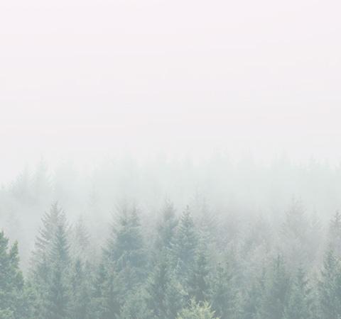 제이숲 스토리